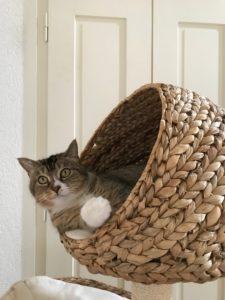 Un chat heureux vit dans les 3 dimensions