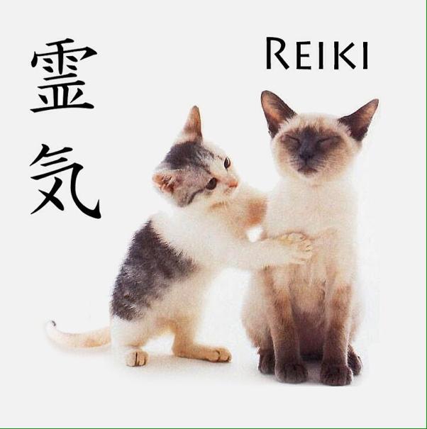 Le Reiki donné aux animaux leur apporte du bien-être